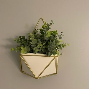 Other - White & gold Succulent or air plant holder!